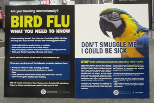 bird flu!