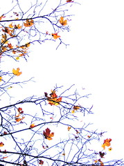 'leaves of my estranged autumn' (sparkleice) Tags: autumn white fall sparkleice