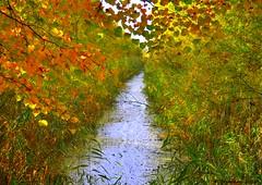 Slootje in herfst kleuren Lelystad