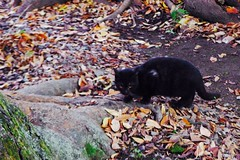 Today's Cat@2016-12-09 (masatsu) Tags: cat thebiggestgroupwithonlycats catspotting pentax mx1