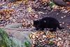 Today's Cat@2016-12-09 (masatsu) Tags: cat thebiggestgroupwithonlycats catspotting pentax mx1