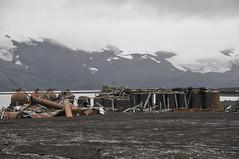 DSC_2529 (orclimber) Tags: island south deception antarctica atlantic caldera aurora polar peninsula pioneer whaling shetland strait cruises antarctic expeditions bransfield orclimber whalersbayportfoster deceptionislandantarctica