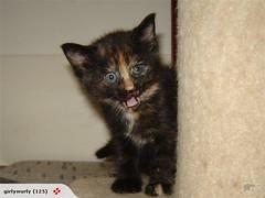 Unser Kätzchen Clementine