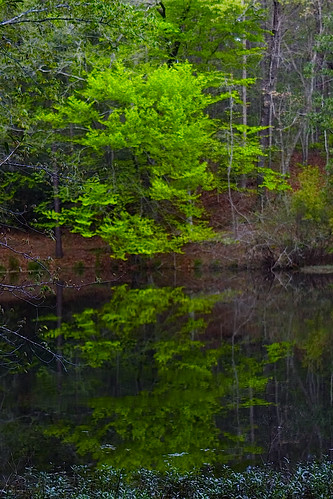 green, reflected