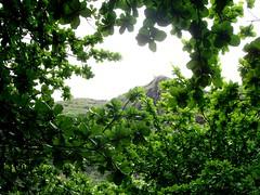 Ke'e beach greenery (xxxNIKKIxxx) Tags: beach greenery kee