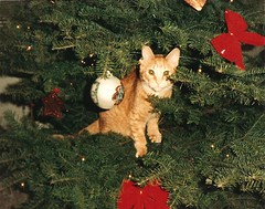 Barnaby in the Christmas Tree (scott185 (the original)) Tags: christmas cats pets utah christmastree