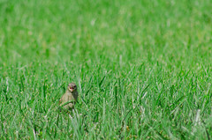 Hayy! (kiaquin93) Tags: hello friends baby green bird nature grass yard out back backyard friend shot side small feather ground crop lucky handheld had hay held yelling feathered