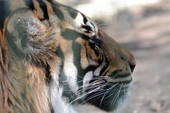 afrodite frederiksberg zoo ebeltoft