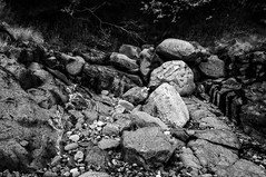 rocks (Brian D. Tucker) Tags: blackandwhite bw monochrome rock rocks newbrunswick shore 2015 d600 glacialdeposits grandmananisland briandtucker