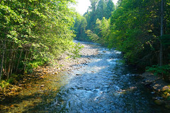 Headwaters of the Willamette (Wolfram Burner) Tags: county camping nature oregon radio river outside outdoors hiking tag pit bull lane species trout burner monitoring exploration tagging antenna oakridge counting willamette listed tecnology tracked wolfram threatened urner salvelinus reintroduction confluentus