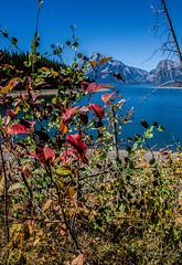 Fall shrubbery (sandy bohlken) Tags: 2016 colterbay day6 grandtetonnationalpark jacksonhole lake nationalpark september tetons wyoming hike vacation