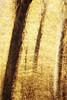 Annual Echo (Brian Truono Photography) Tags: icm nps nationalpark nationalparkservice abstract autumn blur exposureblending fall fineart fineartphotography landscape leaves multipleexposure natural nature pattern seasonal seasons tree trees warm yellow gatlinburg tennessee unitedstates us