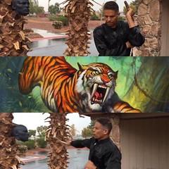 tony valente (tvalente831) Tags: tiger kungfu master