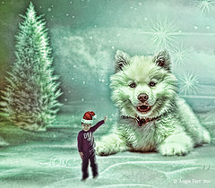 A Christmas Message... (rubyblossom.) Tags: photoshopcontestweek605 pup message christmas important rubyblossom rubystreasures2016