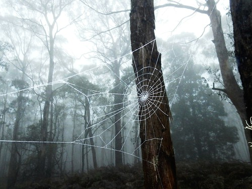Spiderweb - Blue Mountains