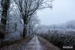 Paysage d'Hiver (CH-Romain) Tags: hiver snow neige winter france foret arbre tree feuille nature morte brume brouillard gele chemin paysage landscape voie glace flocon