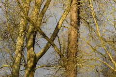 20170104-_IMG1010-Edit (fleetingphotons) Tags: pentaxk1 smcpentaxa200mmf28ed wasingestate fishing warrenbeat kennet trees