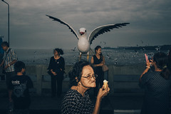 A giant seagull (Mr.Lightman1975) Tags: streetphotography candid looperscollective decisivemoment seagull tourists bird streetphoto