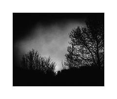 Where there is a light, there is a shadow (cardijo) Tags: österreich austria landscape landschaft sonne sun clouds wolken schatten shadow analog film ilford fp4 rodinal blackandwhite bw black sw schwarzweis rolleiflex tessar carlzeiss nikon coolscan monochrome
