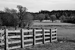 HFF (Harry McGregor) Tags: blackandwhite bw monochrome outdoor fencedfriday hff nikon d3300 harrymcgregor 14 january 2017 winter countryside farmland trees cumnock dumfrieshouse