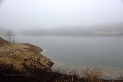 Foggy Afternoon (taylor.michaelj) Tags: swan fog mjt d810 nikon