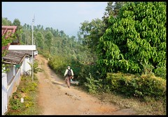 Quiet lane in Valparai (Indianature st2i) Tags: valparai anamalais anamallais tamilnadu westernghats tea teaestate wildlife indianature india nature 2016 2017