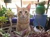 Pinda (telly negotrópica) Tags: gata gatitos gatita hermosa rubia