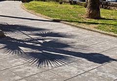 Schatten / Shadow (schreibtnix on 'n off) Tags: italien shadow italy travelling nature reisen europa europe pavement natur structures sicily palermo schatten pflaster sizilien strukturen olympuse5 schreibtnix