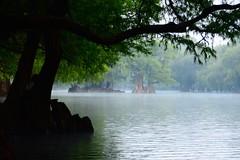 LA MAÑANA. (NIKONIANO) Tags: water sergio de lago agua surreal romero alfaro ahuehuete nikoniano michoacán camécuaro