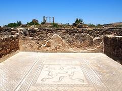 P5261316 (lnewman333) Tags: africa ancient northafrica mosaic historic worldheritagesite morocco fez maroc maghreb column fes volubilis romanruins unescosite 1stcenturyad