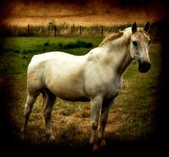 Horse (patrick.verstappen) Tags: summer horse texture animal photo google nikon belgium image sweet pat sigma juli textured picassa gingelom ipernity d5100 pinterest ipiccy picmonkey