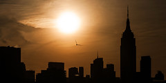 Early morning flight silhouette. (dansshots) Tags: nyc newyorkcity orange silhouette skyline skyscraper sunrise earlymorning empirestatebuilding nycskyline newyorkcityskyline earlymorningsun orangesun skylinesilhouette nikond3 newyorkskyscraper nycsilhouette sunriseovermanhattan empirestateofmind dansshots
