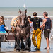 "2015_08_07_Paardenvissers_Oostduinkerke-83 • <a style=""font-size:0.8em;"" href=""http://www.flickr.com/photos/100070713@N08/19781430034/"" target=""_blank"">View on Flickr</a>"