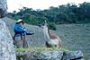 Peru-0713.jpg (Matt and Debbie) Tags: peru llama 2015 wayna winaywayna wiñay