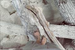 (baba_jaga) Tags: wood oneway baba intothewild cedrino mywitchiswild