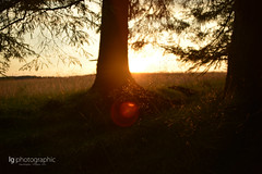 Warm sunset (lg-photographic) Tags: wood sunset summer sun tree nature grass weather germany landscape deutschland lights evening abend licht nikon warm afternoon sonnenuntergang sommer natur clear gras rays sunrays holz landschaft sonne wald baum sonnenstrahlen harz wetter clausthal zellerfeld d5200
