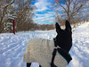 What was that? I heard something! (nothing, he is trying to buy some more tie out) :-) (lezumbalaberenjena) Tags: winter hiver invierno frio cold froid nieve niege snow white blanco blanca blanc blanche ottawa rideau river trail 2016 december diciembre decembre dog perro chien chiot boston terrier bully