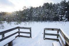 """Ścieżka przyrodnicza """"Dąb Dominik"""" - Poleski Park Narodowy (arkbol) Tags: lubelskie lubelszczyzna polesie poleski park narodowy las forest"""