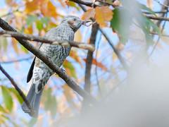 161211_GX7_1450974 (kuad9) Tags: bird