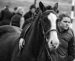 A heavy heart (Frank Fullard) Tags: frankfullard fullard horse lover fair selling sad farewell heart heavyheart adieu westport mayo irish ireland