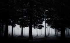 Bosque oscuro (Mimadeo) Tags: scary dark fog night forest fear horror mood monochrome landscape magic tree nightmare shadow light evening nature mystery mist spooky foggy darkness black misty halloween woods morning background evil creepy fantasy gothic mysterious surreal silhouette branch white blackandwhite enchanted ghost atmosphere moonlightleaves green bark trunk sunlight cypress