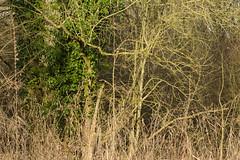 20170104-_IMG0983-Edit (fleetingphotons) Tags: pentaxk1 smcpentaxa200mmf28ed wasingestate fishing warrenbeat kennet trees
