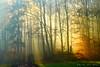 enlightened (Rita Eberle-Wessner) Tags: wald forest wood trees bäume waldweg sonnenstrahlen sunbeams herbstwald herbst licht light sunrays odenwald magic wow