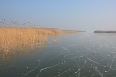 Seebad Mörbisch (anuwintschalek) Tags: nikond7000 d7k 18140vr austria talv winter january 2017 burgenland mörbisch mörbischamsee seebdamörbisch neusiedlersee lake neusiedl see järv jää eis ice kõrkjad schilf reeds