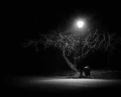 The Shining (SiKenyonImages) Tags: monochrome blackandwhite bw park highcontrast tree streetlamp sinister