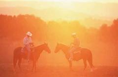 Cowboy, Quarter Horse , Equus przewalskii f. caballus, domestic horse (lotharlenz) Tags: cowboy sonneuntergang sauber qh quarterhorse reiten kalender poster caballo cavalo cheval equus häst hest hestur hobu horse konj paard pferd zirgs