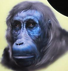 sivapithecus indicus fossils apes mammal mammals fossil ape miocene pakistan reconstruction