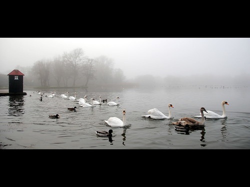 {Queuing for Swan Lake}FCC155