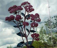 King's Cross revisited (Rachel Dunsdon) Tags: uk flower london skyline mirror cross crane kings regeneration orflection
