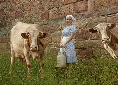 Sommer auf dem Land (Schneeglöckchen-Photographie) Tags: summer kuh cow dorf village sommer land